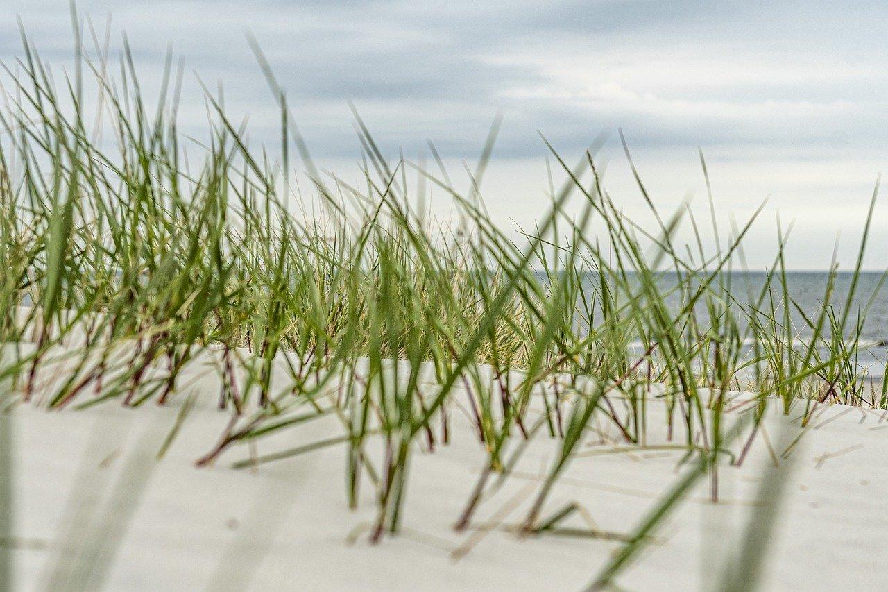 beach, water, baltic sea